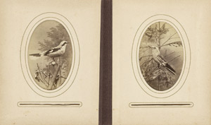 Lot 4017, Auction  111, Birds, Collection of images of Central European birds