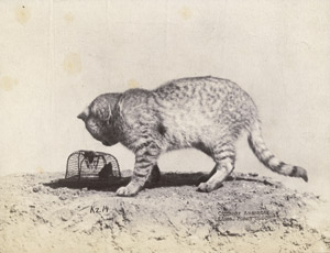 Los 4005 - Anschütz, Ottomar - Cat with mousetrap - 0 - thumb