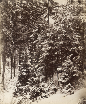 Lot 4050, Auction  113, Kotzsch, August, Snow-covered trees in forest
