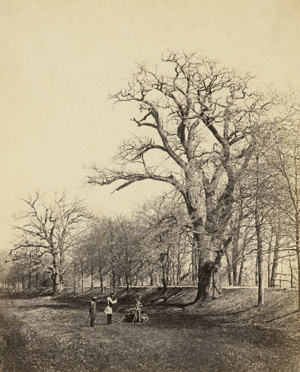 Lot 4077, Auction  113, Völkerling, Gustav, Dessauer Eichen (Oaks in Dessau)