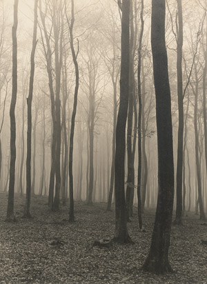 Lot 4086, Auction  113, Baur, Max, Beech forest in fog
