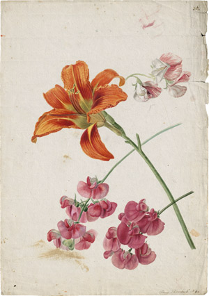 Lot 6261, Auction  114, Blaschek, Franz, Studienblatt mit orangener Taglilie und rosa Wicken