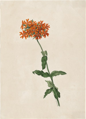 Lot 6280, Auction  114, Blaschek, Franz, Orange blühende Schlüsselblume