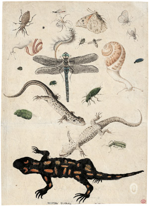 Lot 6618, Auction  115, Deutsch, um 1600. Studienblatt mit Feuersalamander